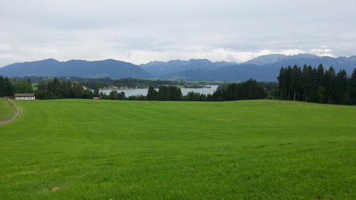 Der Forggensee mit Alpenblick