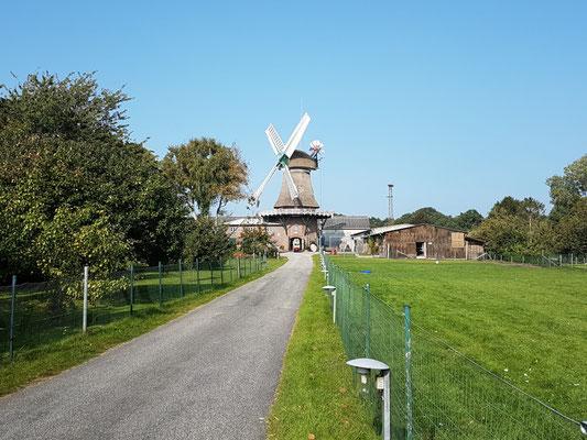 Mühle Eiklenborg (Frisia) in Logabrium