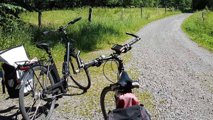 Im Wald nach Gersfeld (Röhn)
