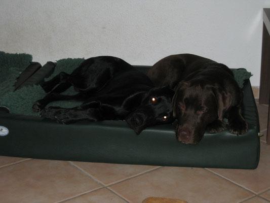 Finch und Toni kuscheln