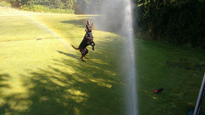 Finch fängt Wasserfontäne