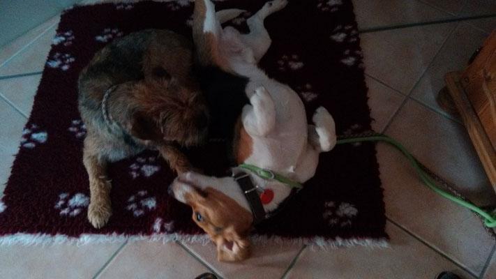 Dexter und Hunter
