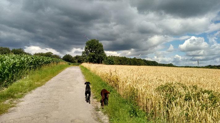 Finch und Toni in den Feldern