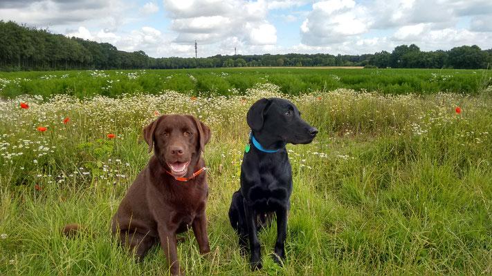 Toni und Finch vor dem Möhrenfeld