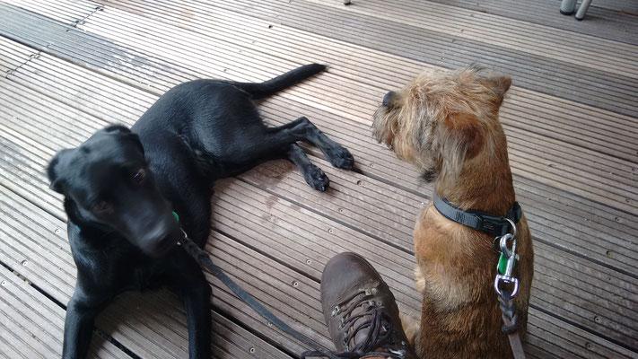 Finch und Dexter im Biergarten