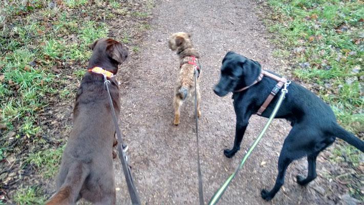 Toni, Dexter und Finch