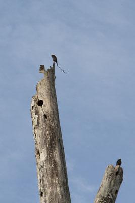 Vögel in der Karibik