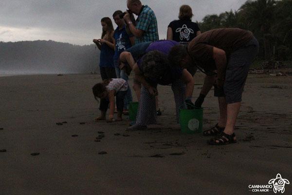 Freilassen der Meeresschildkrötenbabies (auf der Rundreise November/Dezember 2016)