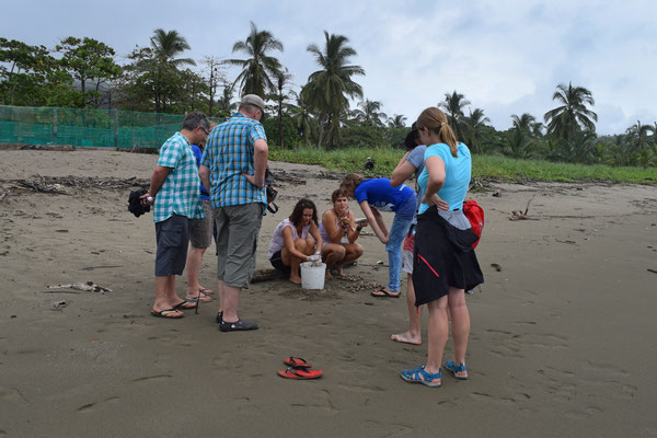 Besichtigung der Meeresschildkrötenprojekte (auf der Rundreise November/Dezember 2016)