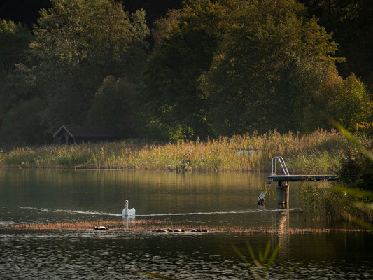 Ein paar tolle Tage am Mattsee