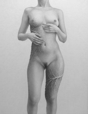 浸透する / 2014 / 鉛筆、紙 / 410×318mm