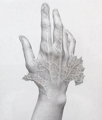 「葉になるのはどんな気持ちか」 / 230×180mm / Silverpoint,pencil on panel. / 2016