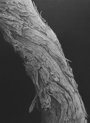 存在 / 2014 / 鉛筆、グラファイト、紙 / 333×242mm