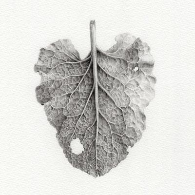 葉の姿2・2015・150×150mm・鉛筆、画用紙
