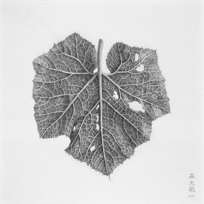 「Leaf veins」/ 16.5x16.5cm / Pencil on paper.
