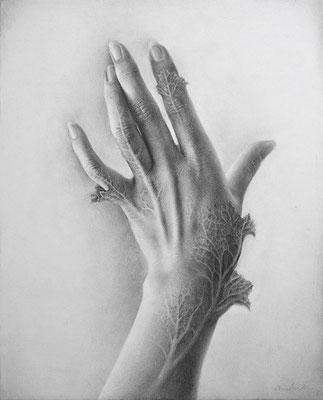 「朝、目が覚めたら皮膚が葉化していた。」 / 273×220mm / Pencil on paper.