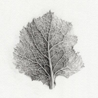 葉の姿1・2015・150×150mm・鉛筆、画用紙