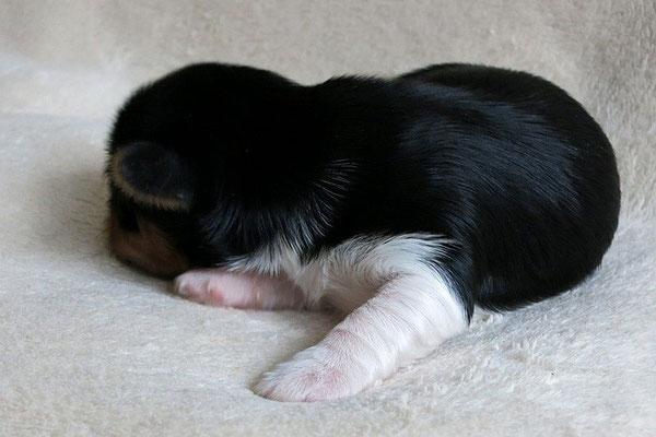 Fumiko 2 Wochen alt, 333 g