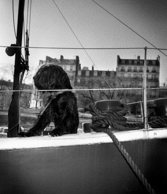 Chien - Paris #1