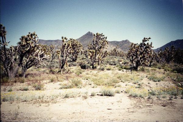 Mojave #1