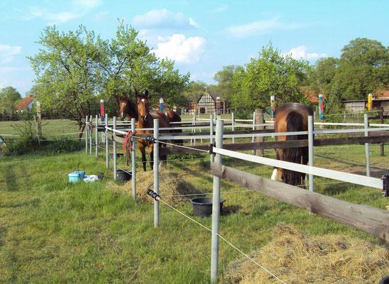 Unterkunft für die Pferde im Wendland