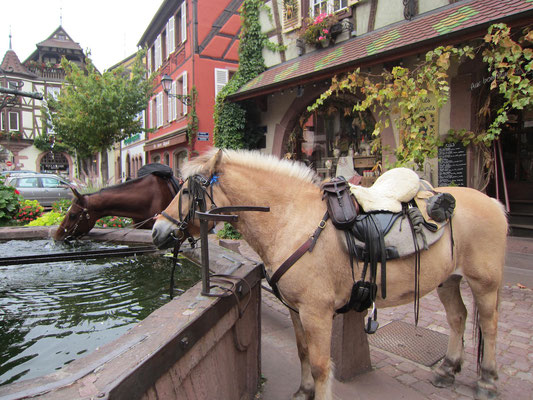 Erfrischung an einem Brunnen im Elsass
