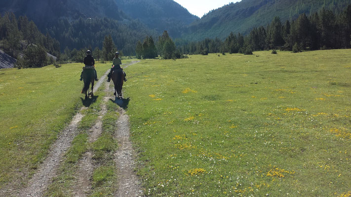 über grüne Alpenweiden am Ofenpass