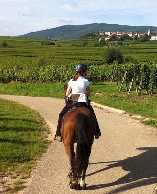 auf der Weinstrasse im Elsass