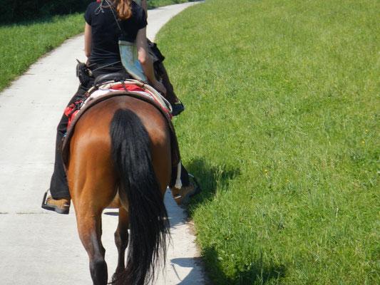 Pferd, Karte und die Reise kann beginnen...