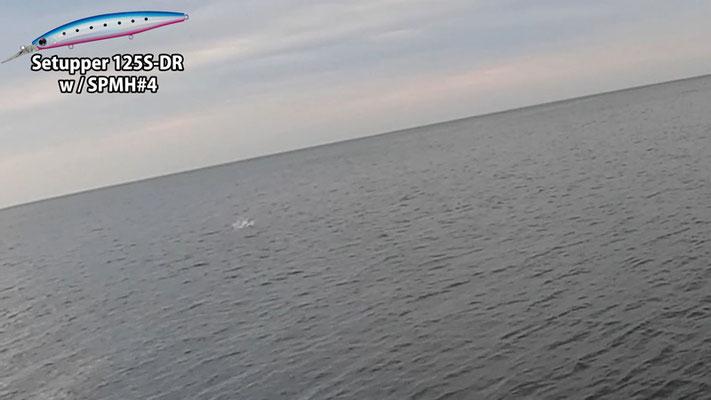 ボイル 時合突入で青物3連発 淡路島の釣り・ショアジギング