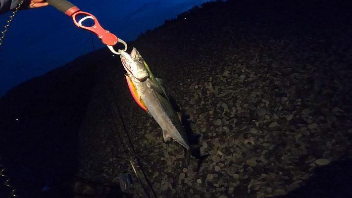 和歌山 煙樹ケ浜 ショアジギングで青物サゴシを釣った
