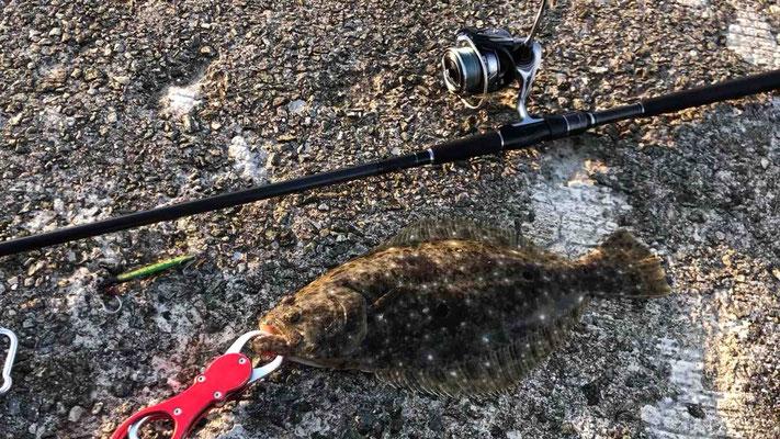 淡路島 郡家港で青物メジロをセットアッパーで釣った