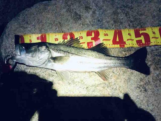 大阪湾奥の西宮浜 激シブの中、シーバスを釣り上げました!