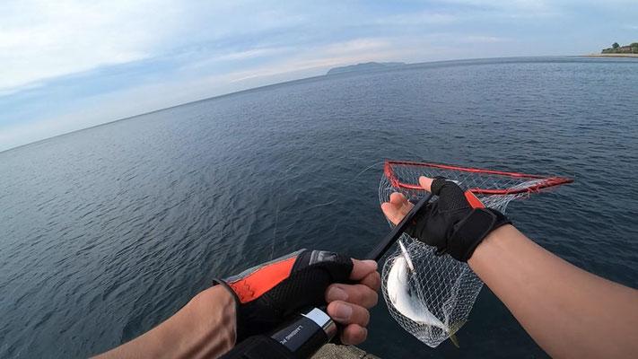 時合突入で青物3連発 淡路島の釣り・ショアジギング