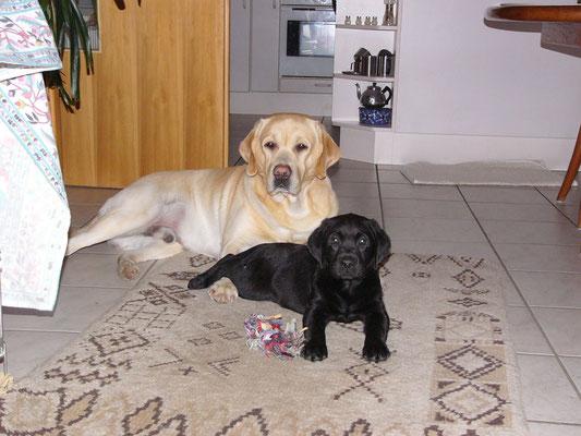 2006 Der große Paddy passt gut auf seinen kleinen Bruder auf