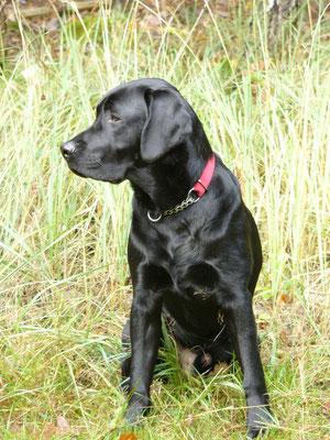 2006  6 Monate alt und schon ein richtiger Hund