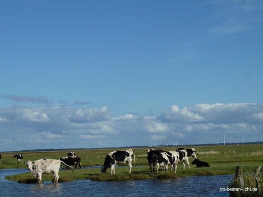 typisch Dänemark