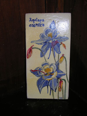 mattonella botanica di ceramica dipinta a mano su cotto 15 x 30 aquilegia caerulea