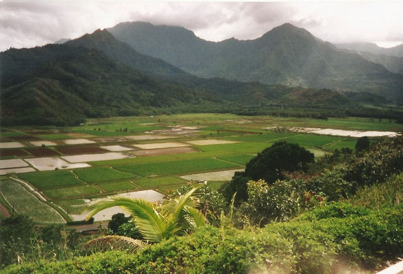 Tarofelder - Kauai