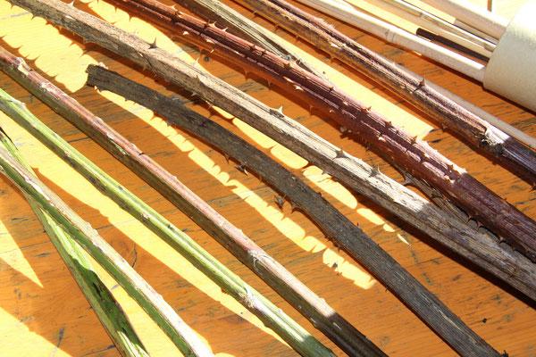 Das Sind Äste vom Brombeerstrauch, die kann man auf einen Holzstab spießen und einfach so in den Boden stecken und dann warten - mnachmal dauert es aber auch zwei Jahre :-(