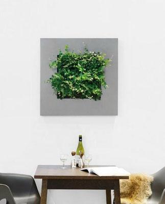 Pflanzenbilder Live Picture