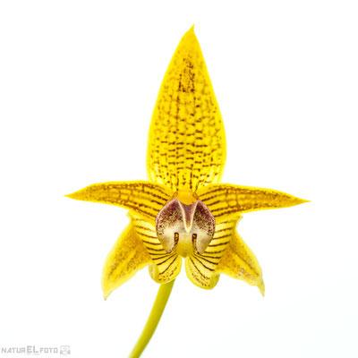 Orchideen im Botanischen Garten Wien mit Micha Pawlitzki