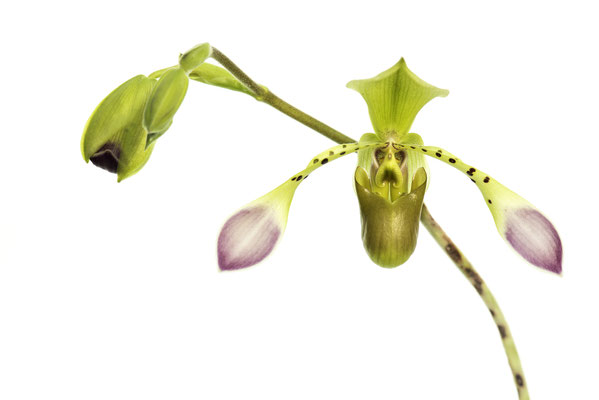 Orchideen Deggendorf mit Micha Pawlitzki