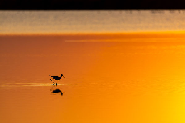 Stelzenläufer im Sonnenuntergang
