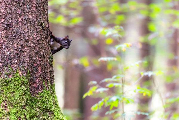 im Eichhörnchenwald mit Stefan Imig