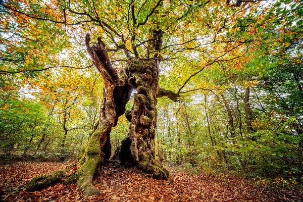Wald - und Pilzfotografie mit Stefan Imig