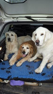 Quennie, Yava und Carlchen