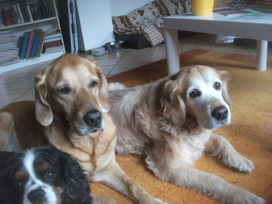 Linus, Cara und Yava