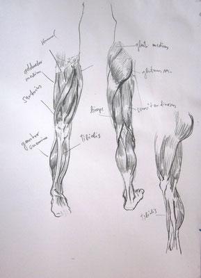 aus dem Anatomieheft 1982