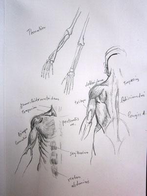 Anatomiefheft 1982
